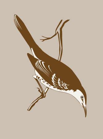 thrush silhouette on brown  background, vector illustration Vector