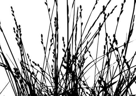 illustration herbe: silhouette herbe sur fond blanc, illustration vectorielle