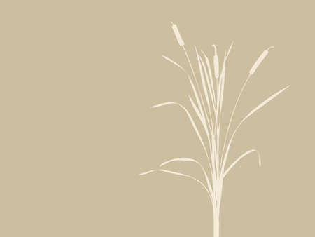 bulrush: bulrush silhouette on brown background, vector illustration