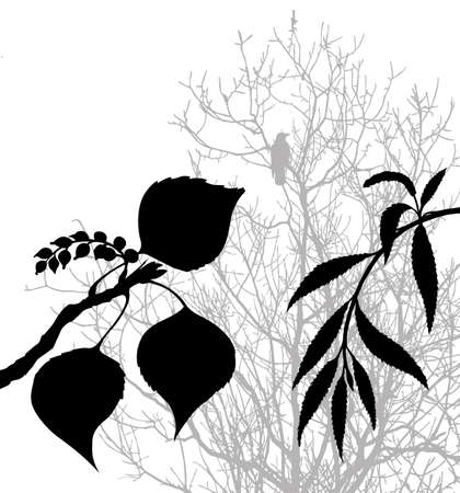 plants silhouette on white background, vector illustration Vector