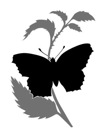 butterfly silhouette on white background, vector illustration Stock Vector - 12597200