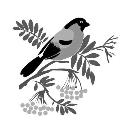 bullfinch silhouette on rowanberry branch, vector illustration Illustration