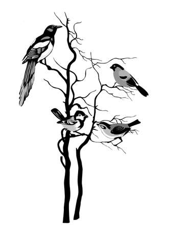 magpie: birds silhouette on white background, vector illustration