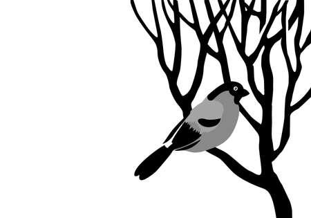 bullfinch silhouette on wood branch, vector illustration Vector