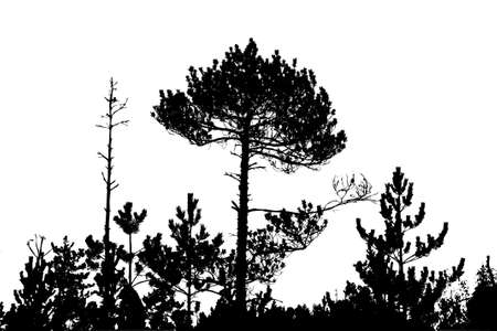 mighty: tree silhouette on white background, vector illustration