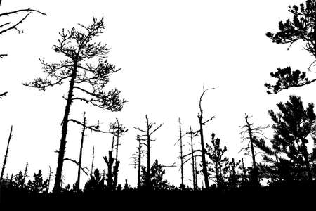 tree silhouette on white background, vector illustration Stock Vector - 12597010