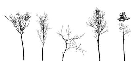 set tree silhouette on white background, vector illustration Stock Vector - 12597031