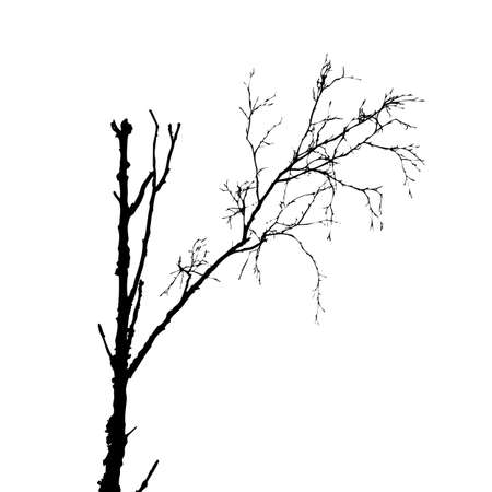 tree silhouette on white background, vector illustration Stock Vector - 12597175