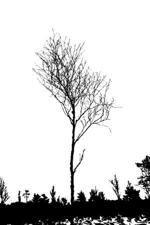 tree silhouette on white background, vector illustration Vector