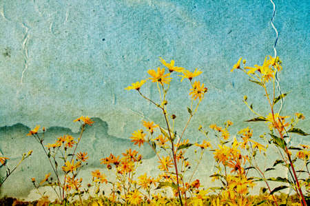 yellow field flowerses on grunge background photo
