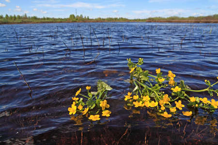 field flowerses in river water photo