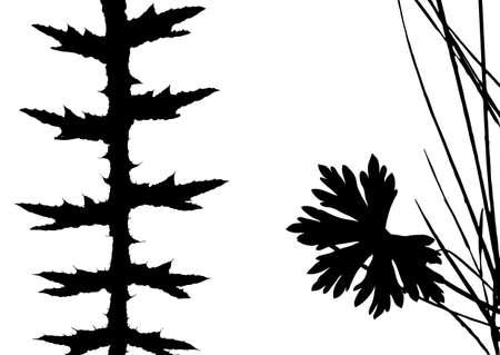 herb silhouette on white background, vector illustration Illustration