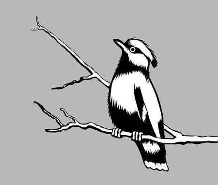 bird silhouette on gray background, vector illustration Vector