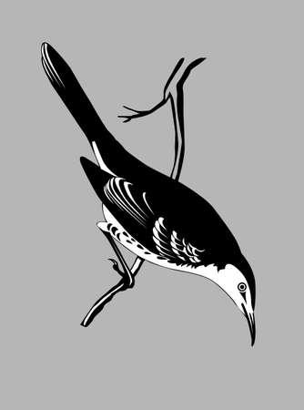 thrush silhouette on gray  background, vector illustration Vector
