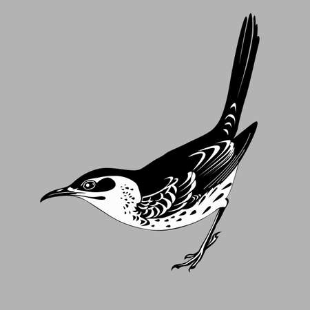thrush: thrush silhouette on gray  background, vector illustration