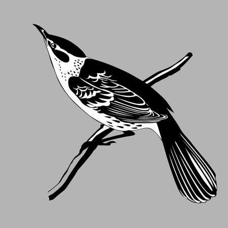 Soor Silhouette auf grauem Hintergrund, Vektor-Illustration