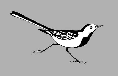wagtail: wagtail silhouette on gray  background, vector illustration