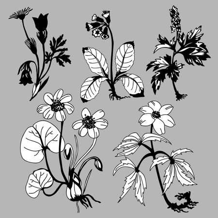 field flowerses on gray background, vector illustration Vector