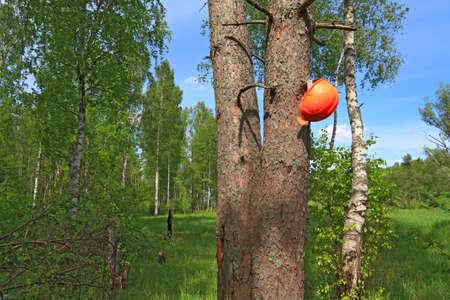 woodsman helmet on tree Stock Photo - 13804454