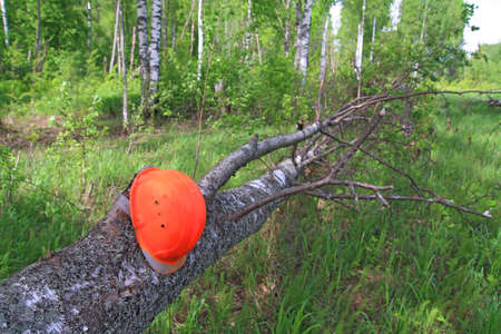 woodsman helmet on tree Stock Photo - 13804387