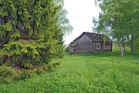 penal institution: big fir tree near old rural building Stock Photo