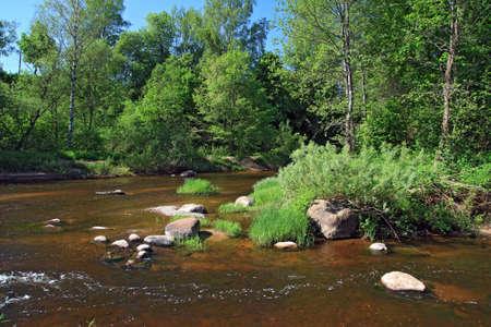 mountain river amongst green tree photo