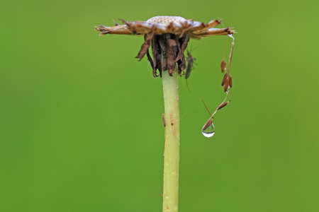 rain dripped on green herb Stock Photo - 14041620