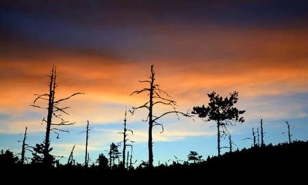 perish: wood silhouette on celestial background Stock Photo