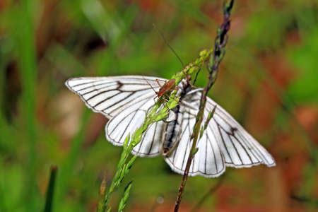 blanching butterfly on green background Stock Photo - 14261916