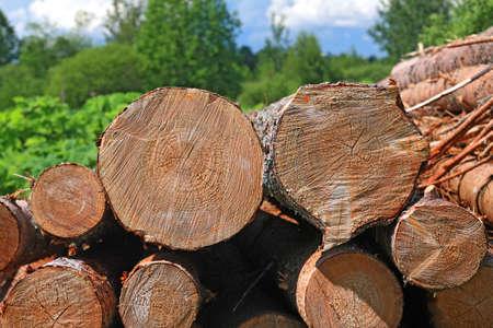 sawn: sawn up tree  Stock Photo