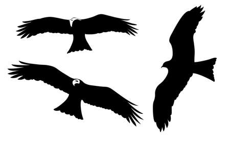 ravenous birds on white background, vector illustration Vector