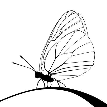 butterfly tattoo: mariposa silueta sobre fondo blanco, ilustraci�n vectorial