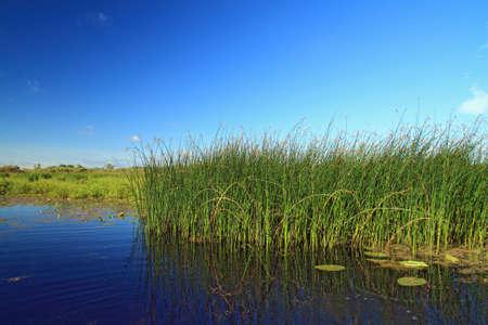 pantanos: pantano hierba