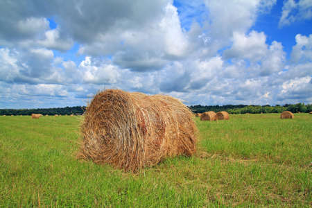 agronomic: stack hay on summer field