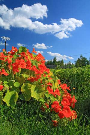 summer flowerses near rural building photo