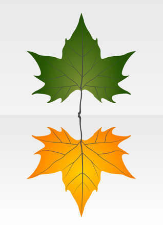 Green and yellow leaf Stock Vector - 16974046