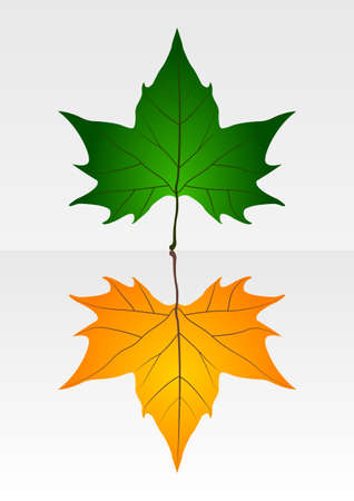 Dry and crisp leaves Stock Vector - 24528015