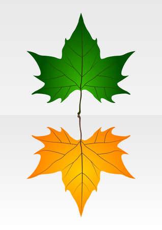 crisp: Dry and crisp leaves Illustration