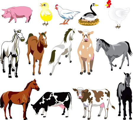 Vector Ilustration of 14 Farm Animals birds, and mammals. Vector