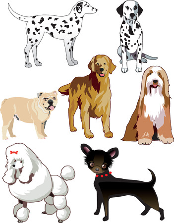 Illustration of 7 dogs or puppies isolated.