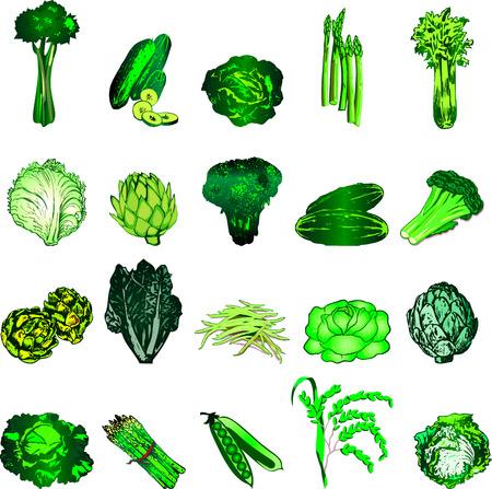 20 녹색 야채 아이콘의 그림입니다.