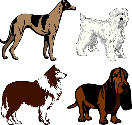 Illustration of 4 different dogs