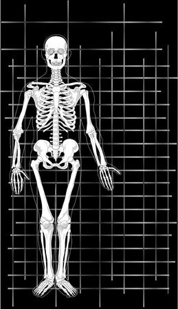 beenderige: Vector afbeelding van een visitekaartje skelet. Stock Illustratie