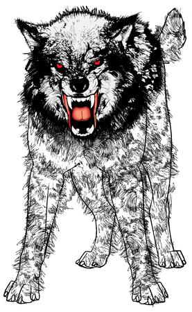 Vector illustratie van een zeer boze woeste wolf.
