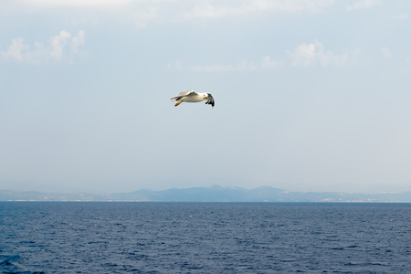 Seagull flying over the sea. The coast of Greece