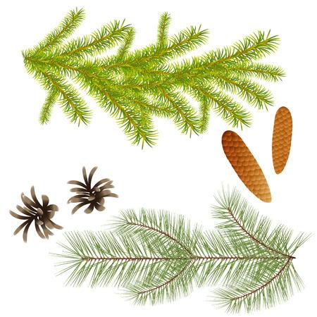 Niederlassung von Fichten- und Kiefernbäumen mit Kegeln für Dekoration, Design von Grußkarten des neuen Jahres, Schaffung von Verbundstoffen mit Koniferenbäumen. Isolieren