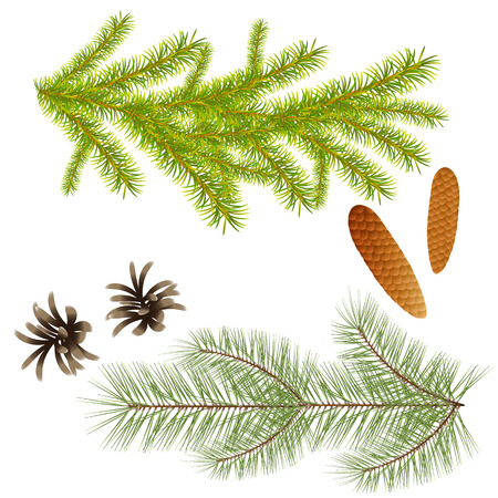 Branch of spruce and pine trees with cones for decoration, design of New Year greeting cards, creation of composites with coniferous trees. Isolate Illustration