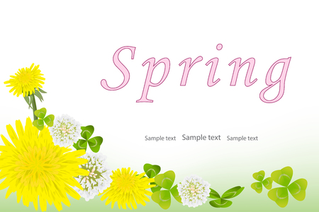 Spring background with yellow dandelion flowers, white clover and clover leaves. Vector background for spring, summer sale, congratulations on International Women's Day. Greeting card. Space for text