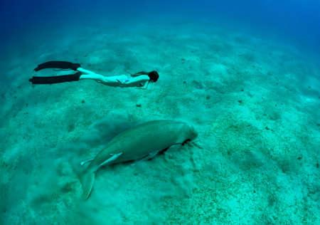 free diving girl and manatee in deep sea. two mermaid.