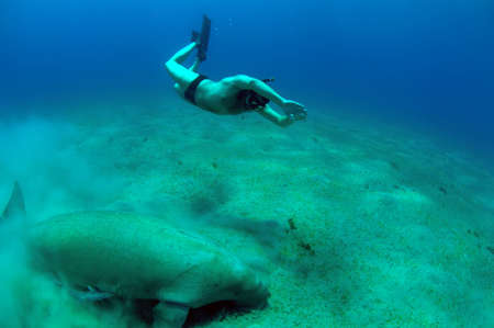 free diving man and manatee in deep sea.
